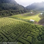 Corn Maze on the oregon coast