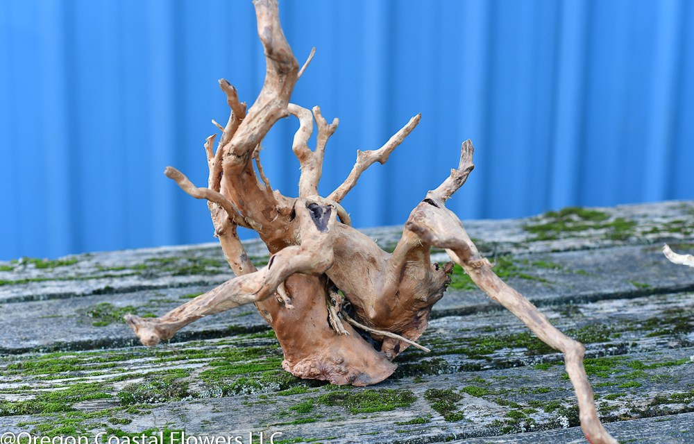 Spider Wood Spider Root perfect for fish aquarium & reptile terrarium