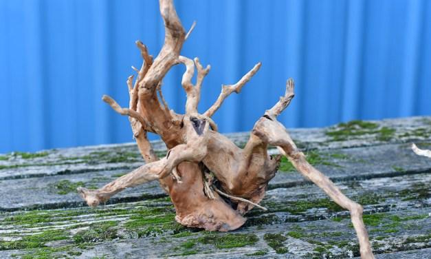 Spider Wood Spider Root perfect for fish aquarium & reptile terrarium