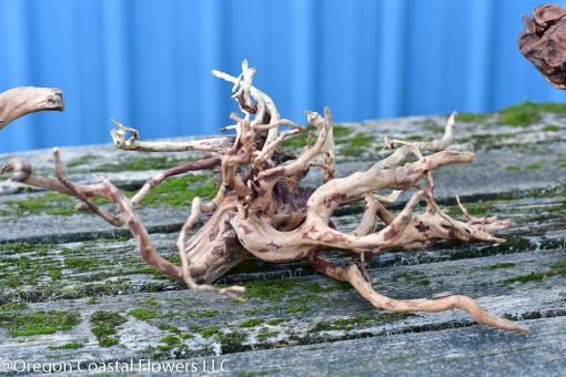 spider root for fish aquarium & reptile terrarium