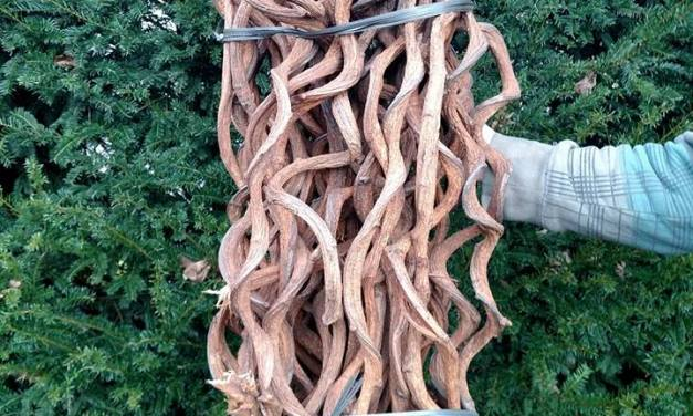 Twisted Wood Natural Rattan