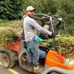 montbretia harvest