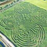 corn mazes on the oregon coast