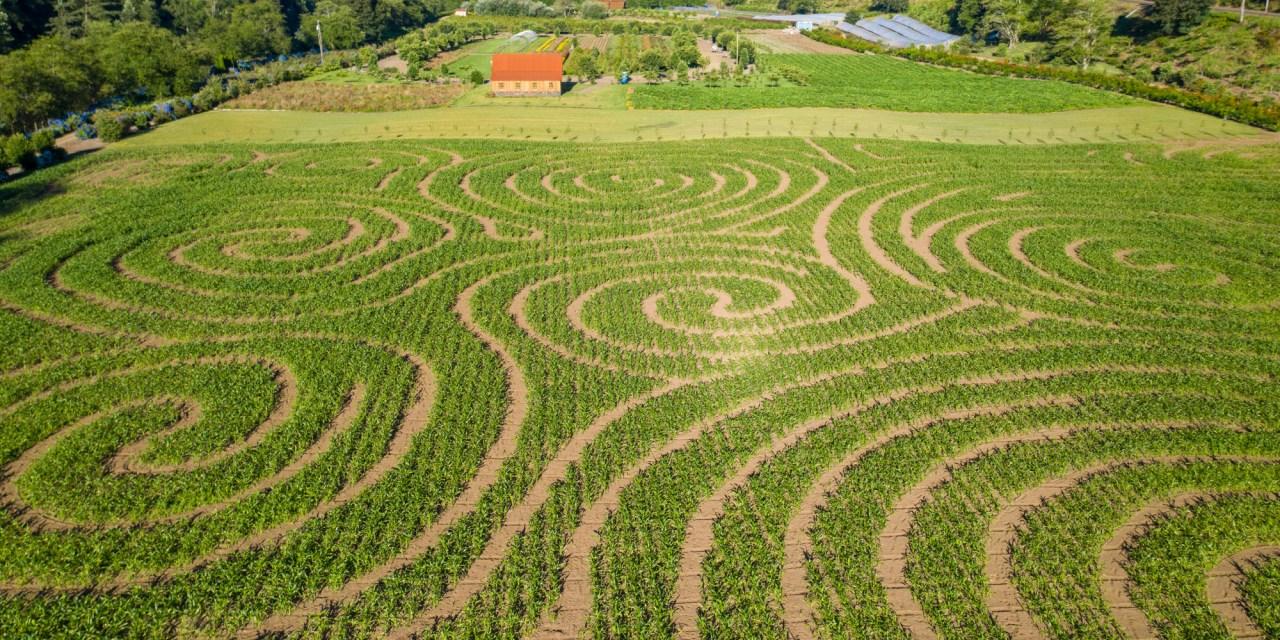 2020 Kilchis River Pumpkin Patch & Corn Maze is opening soon