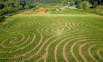 2020 Kilchis River Pumpkin Patch & Corn Maze is opening soon