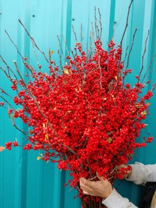 11.21.19 Winter Ilex Christmas Red Berries Wholesale