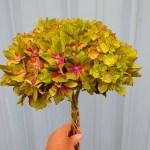 Green pistacio hydrangea