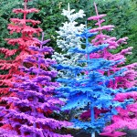 flocked colorful trees