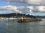 Oregon Coast Seals