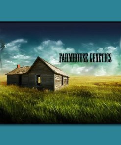 FARMHOUSE GENETICS