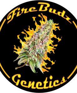 FIRE BUDZ GENETICS