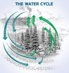 diagram of the water cycle [ 1000 x 1027 Pixel ]