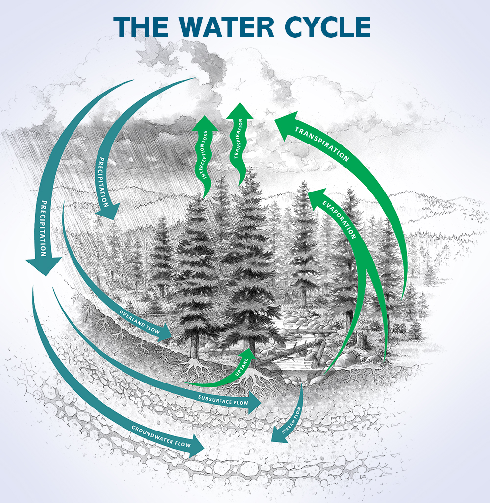 hight resolution of diagram of the water cycle