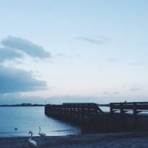 Swan Beach