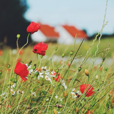 Danish nature in Fyn