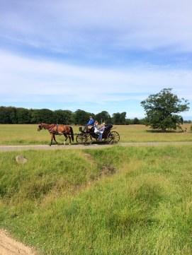 Carriage ride through Dyrehaven