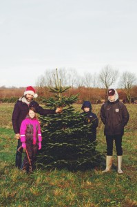 Where to Find Christmas in Denmark | Try a tree farm and julemarked via Oregon Girl Around the World