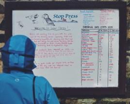 Farne Islands Northumberland UK Seabirds