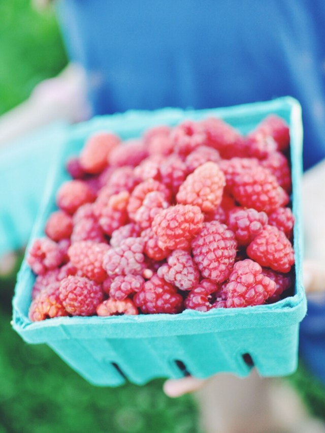 Basket full of fresh plucked raspberries