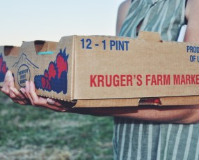 Kruger's Farm berry picking, Sauvie Island, Portland Oregon summer