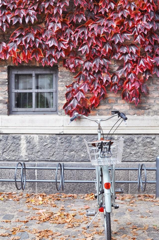 Where to find fall color in Copenhagen | Oregon Girl Around the World