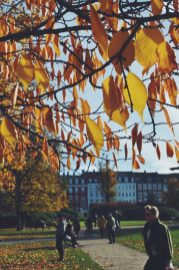 Autumn is awesome in Copenhagen