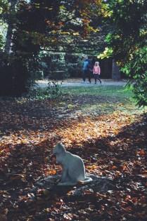 Cats in the cemetary - Assistens Kirkegård, Nørrebro neighborhood