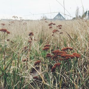 Colors of a Danish Beach | Scandinavian Palette Collecting | Oregon Girl Around the World