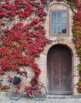 Red Copenhagen Bicycle against wall with fall red ivy leaves | Copenhagen Colors in Autumn | Oregon Girl Around the World