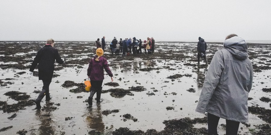 Take an Oyster Tour in the Wadden Sea National Park, Denmark