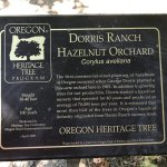 Hazelnut Orchards at Dorris Ranch