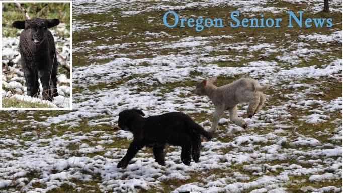 May 2019 Oregon Senior News