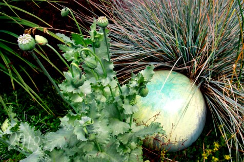 note how the pale greens play off each other from the ball, the grass and the poppy foliage