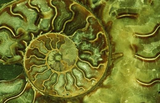 Spiral, photography by Christine Dentel