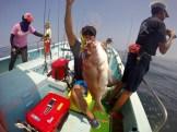 ナイス大鯛