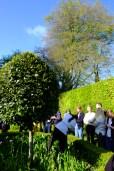 In the herb garden