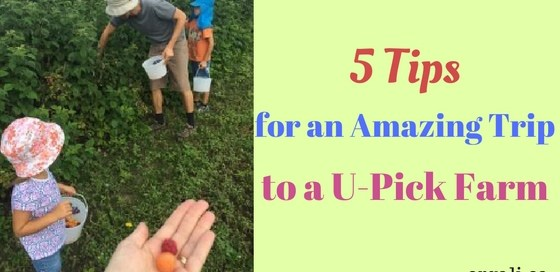 how to have fun at a U-pick farm