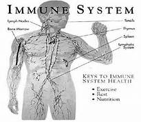 supporting the immune system
