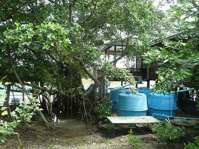 Saving rain water 3582349888_87b713bc77_z