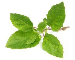 holy-basil-leaves