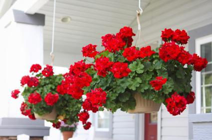 how to care for plants - hanging basket