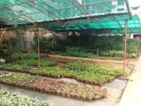 rooftop garden | Organic.Adventures.In.Bangalore