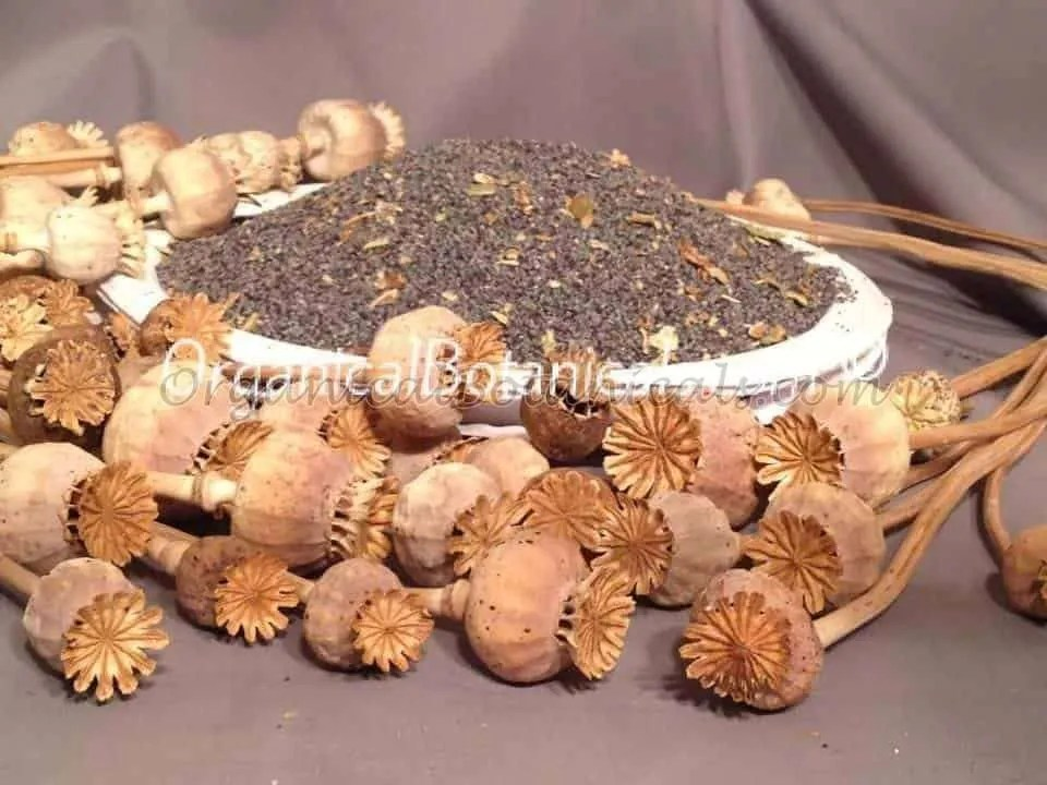 "Unwashed ""Filthy' Papaver Somniferum Opium Poppy Seeds   BULK   Organical Botanicals"