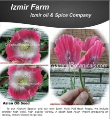Izmir Asian OB Papaver Somniferum Poppy