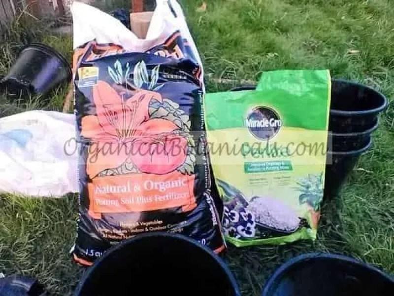 TUTORIAL: Grow Poppies in Pots