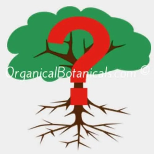 Botanical Identification