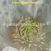 China White Papaver Somniferum Poppy Seeds – VIABLE