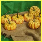 Miniature Pumpkin Seed - Hooligan
