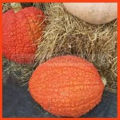 SQUASH Seeds - Red Warty Thing