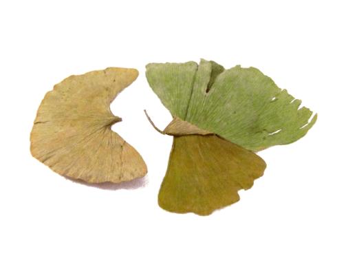 Bai Guo Ye (Yin Guo Ye) - Organic Chinese Herbs
